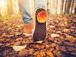 55631812 - feet sneakers walking on fall leaves outdoor with autumn season nature on background lifestyle fashion trendy style